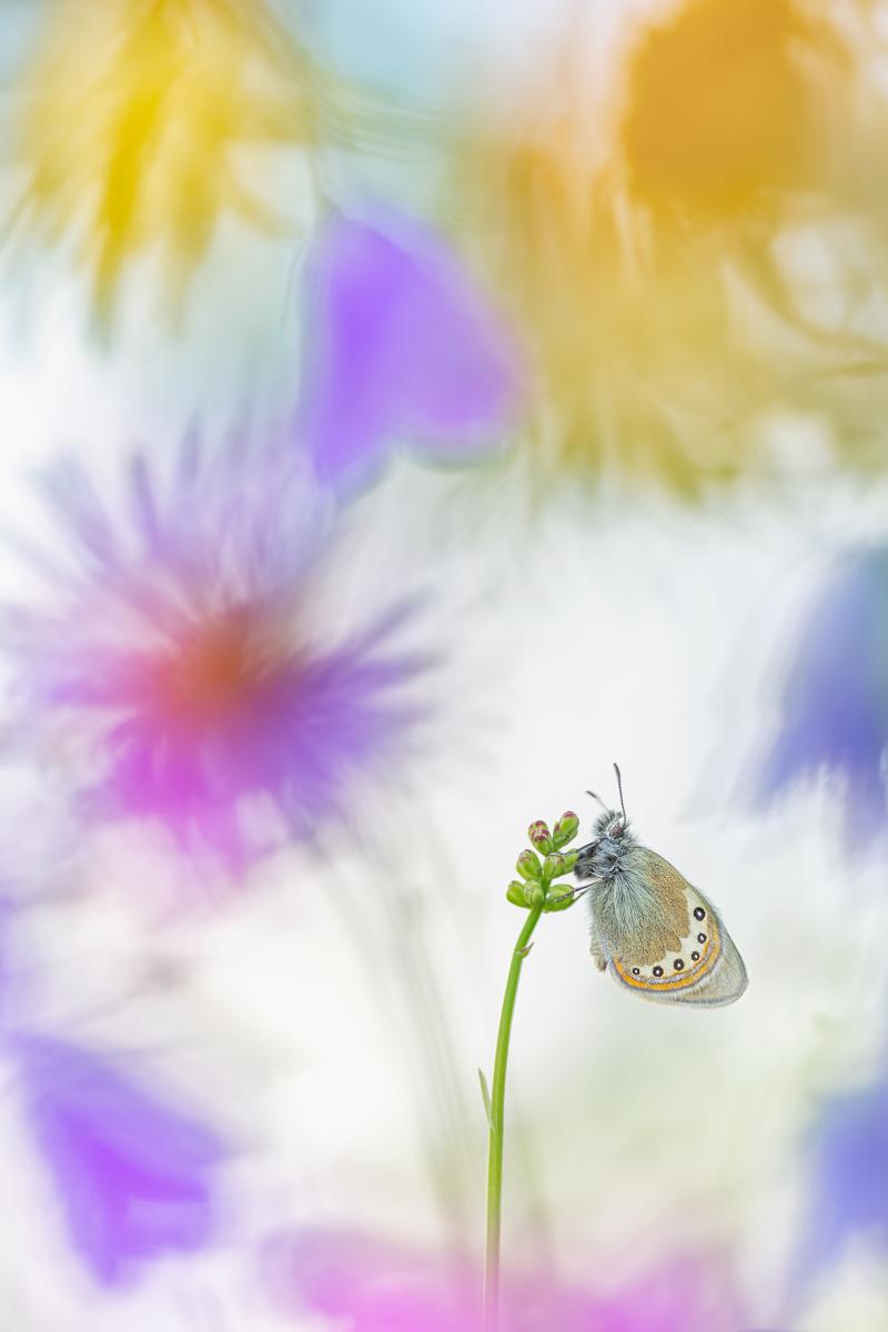 Henrik Spranz  | Flower Meadow