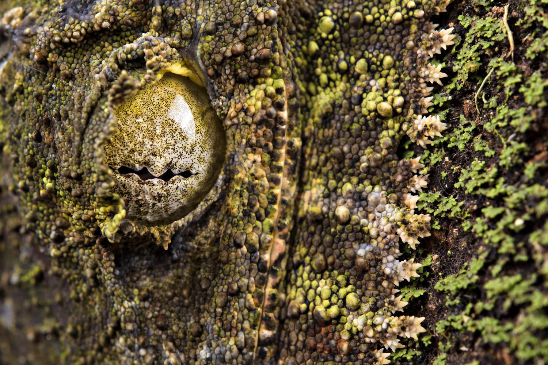 Emanuele Biggi  | Moss with Eyes