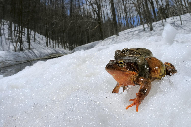 Vittorio Ricci    Hot Frogs