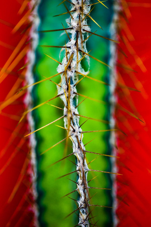 Andrew Wilson    Cactus Ridge