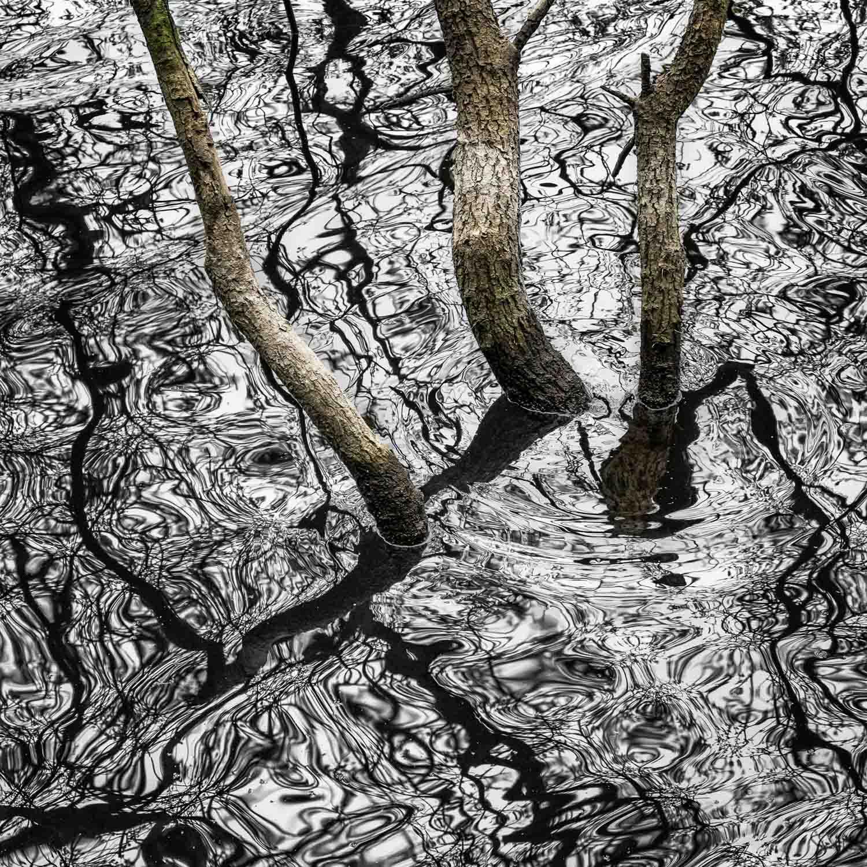Lizzie Shepherd  | Reservoir Bogs