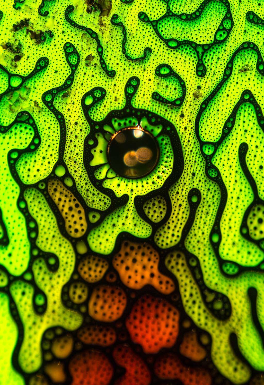Justin Zoll    Ferrofluid 3