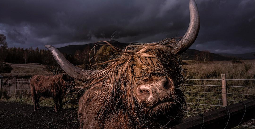 bull-short.jpg