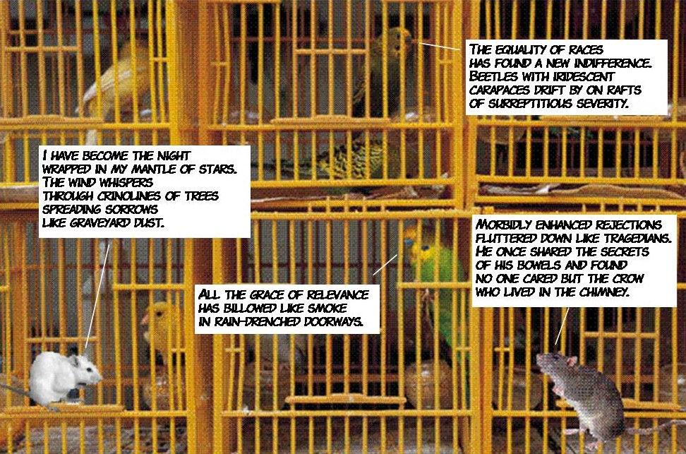 Katya & Clarence with Birdcage