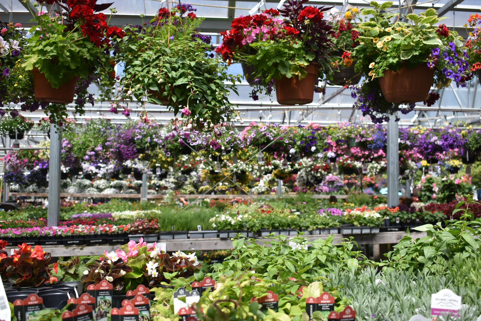 Inside Greenhouse Shot 1.jpg