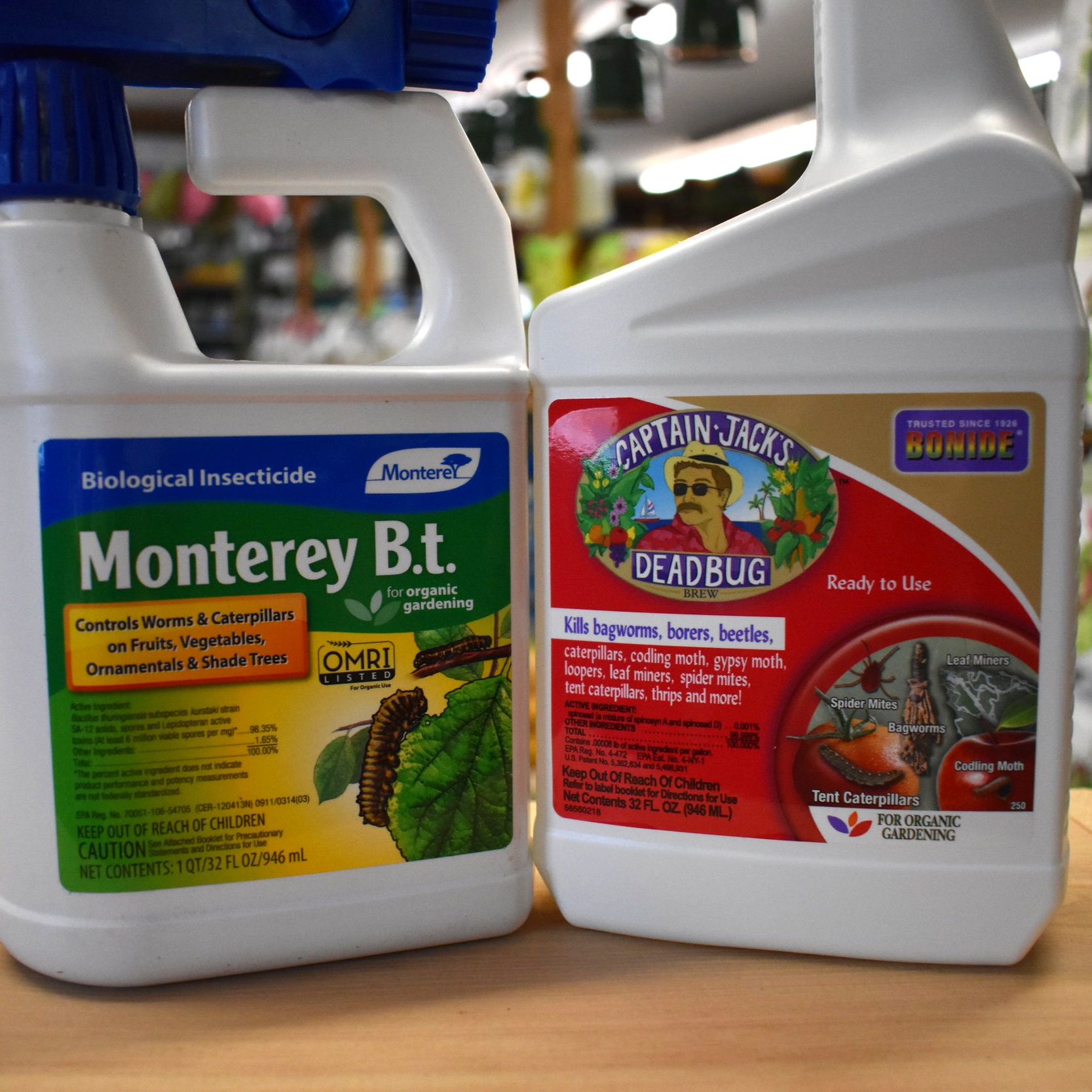 Biological Defense Against the Dreaded Winter Moth!