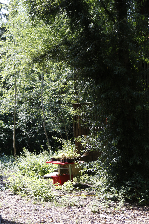 Garten_4.jpeg