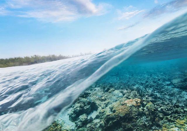 Underwater paradise 🏝️ #splitlevel #snorkelling @visitmaldives #maldives #maldivessurf #surfmaldives #islandlife #thulusdhoo #island_features #bikinilife #ocean #krakeninn #sunnyside #maldivesislands #travelmaldives #coralreef #maldivesmania #underwaterphotography #beautifulmaldives #omaldives @maldives @officialmaldives @travelzoouk #maldives_ig #surfblog #surfblogger #turtle #surftravel #surflife #oceanlife #mynikonlife