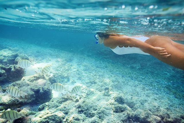Fishtank 🐠  #aquatech #splitlevel #snorkelling @visitmaldives #maldives #maldivessurf #surfmaldives #islandlife #thulusdhoo #island_features #bikinilife #ocean #krakeninn #sunnyside #maldivesislands #travelmaldives #coralreef #underwaterphotography #beautifulmaldives #omaldives @maldives @officialmaldives #maldives_ig #surfblog #surfblogger #turtle #surftravel #surflife #oceanlife #mynikonlife