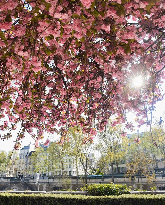 Recently I've been spending time in Paris photographing the city. In spring it's really beautiful 🌸  #parisjetaime #photography_love #parissecrets #thisisparis #paris_vacations #parisfrance #parisweloveyou #pariscityvision #parislove #parisgram #paris_tourisme #france.tourisme #parisphotographer #pariscityguide #unlimitedfrance #mynikonlife #visitparis #travel awesome #nikontop #notredameparis #nikoneurope