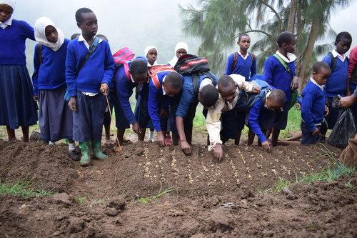 Tanzania+planting+1.jpeg