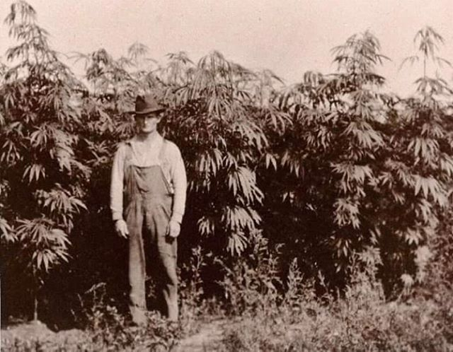 A Michigan cannabis farmer standing with his crop in 1910. It's crazy to think how different the world would be had prohibition failed.. #history #woah
