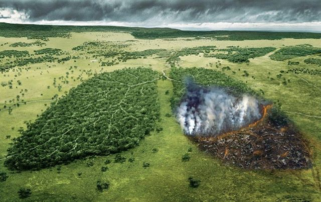 It's so sad to hear the fires raging in the Amazon were started by ranchers and loggers. This beautiful ecosystem generates 20% of the worlds oxygen. If you're interested in helping check out @onetreeplanted $1 = 1 tree