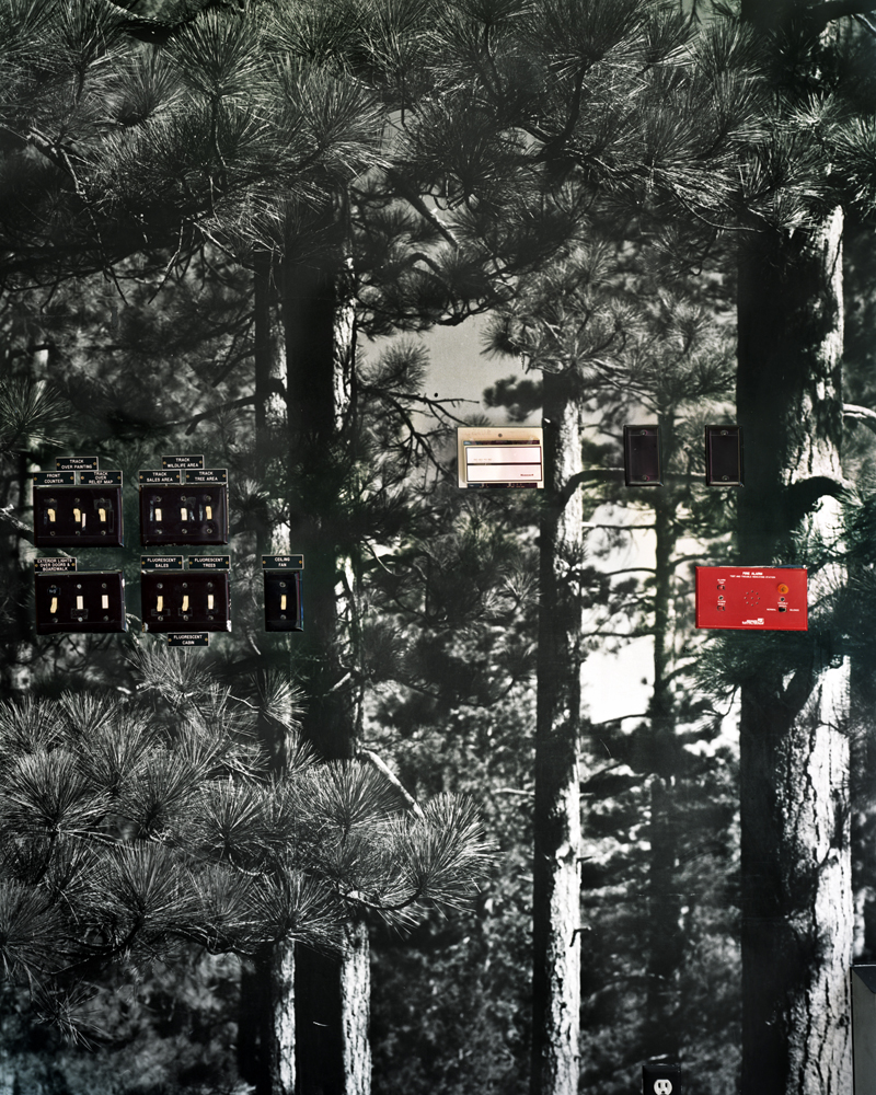 Forest Light , 2010 Archival pigment print 50 x 40 inches   ————