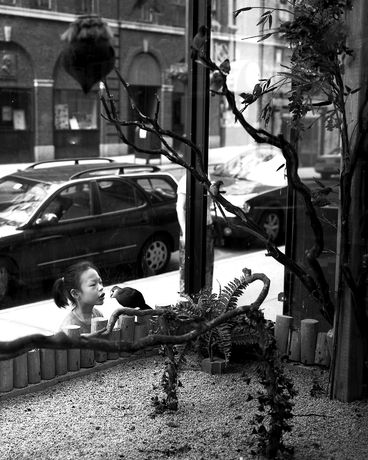 Bird Shop , 2002/2004 Silver gelatin print 24 x 20 inches      ————