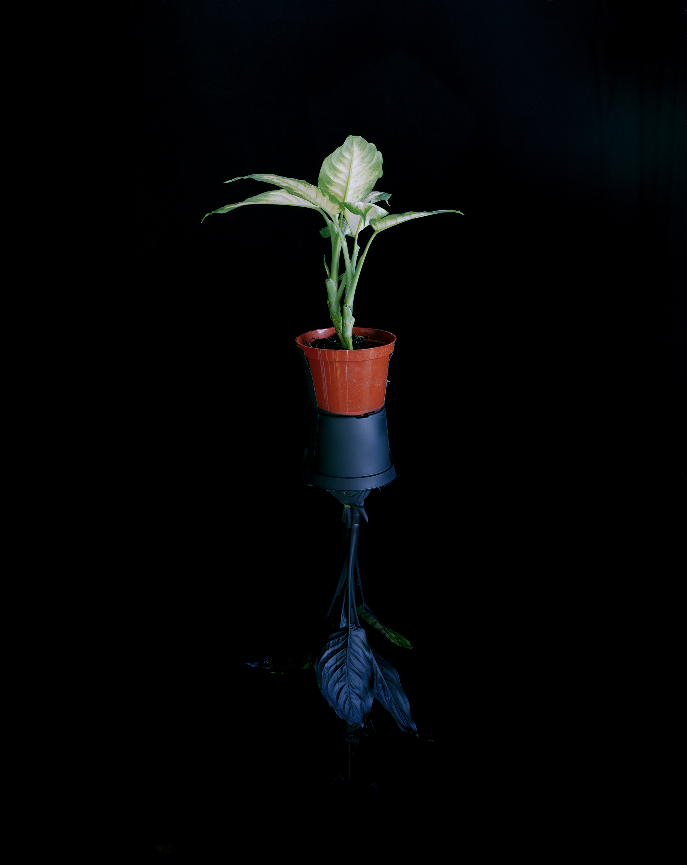 Plant Mirror , 2012 Archival pigment print 50 x 40 inches   ————