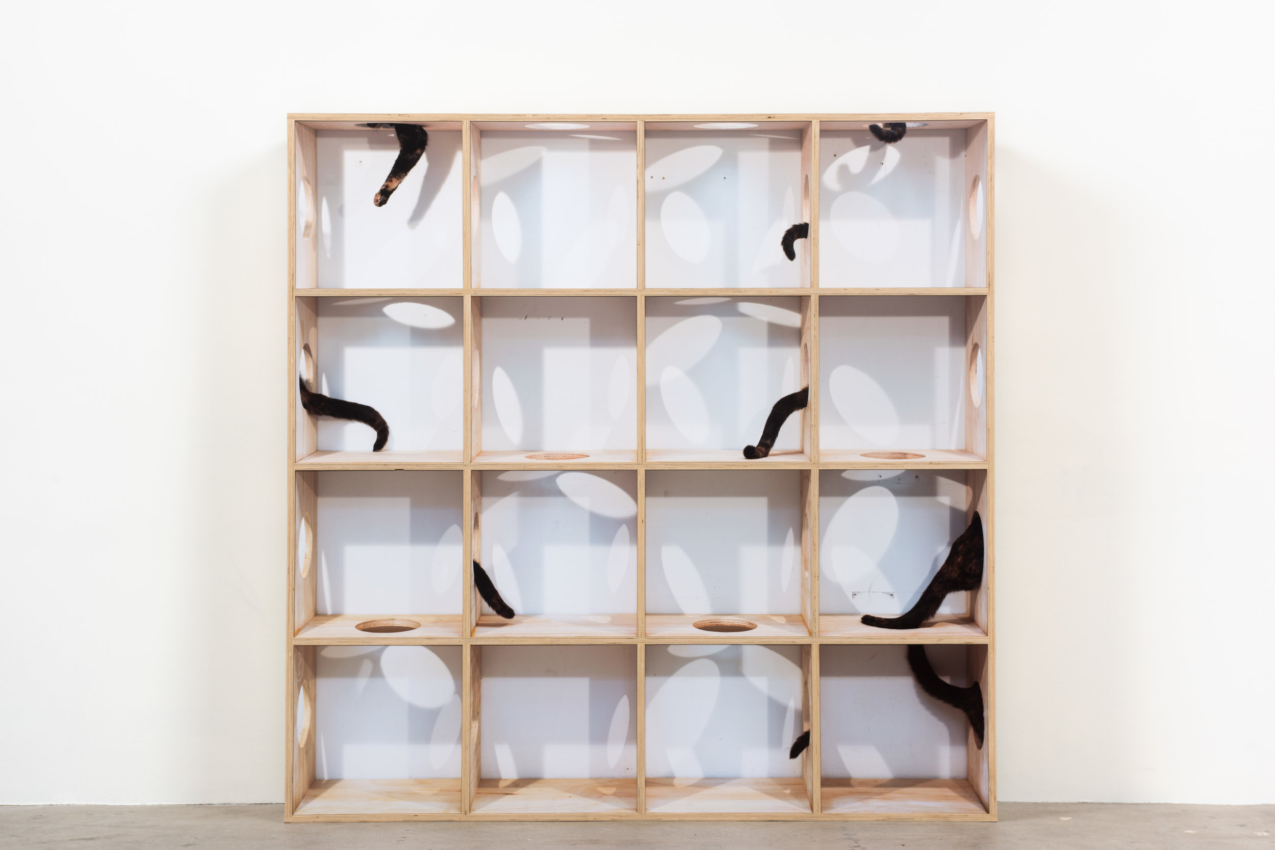 Disappearing Act , 2019 Archival pigment prints and wood 64 x 64 x 10 inches   ————