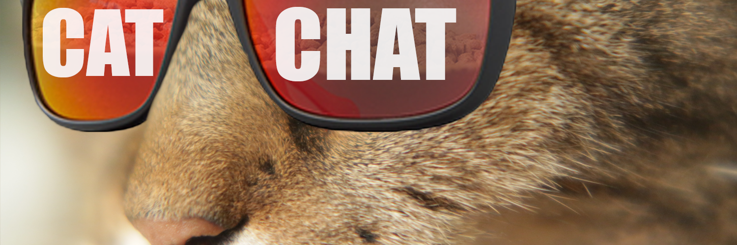 cat chat banner 1.png