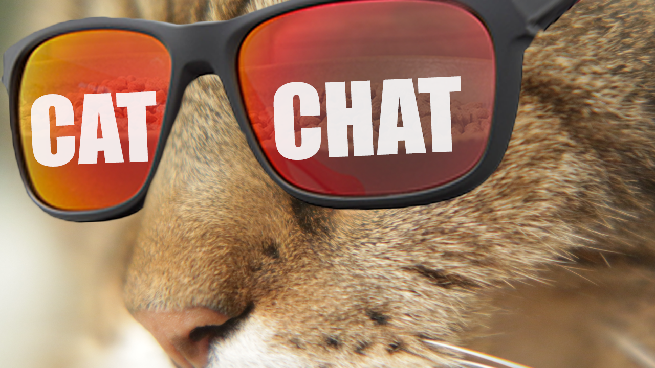 - Cat Chat is a show where Nate and Mike chat......about cats!