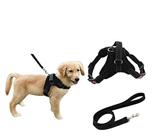 PUP HARNESS -