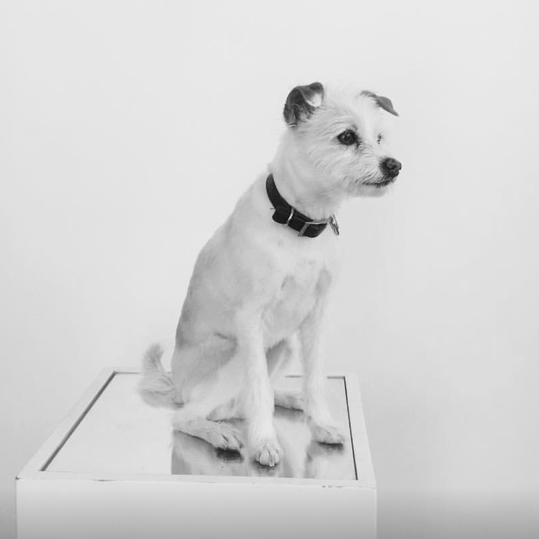 Bella - OFFICE PET