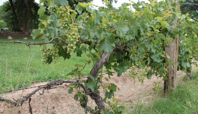 2015.07.17 Corrales Classic Farms-25.jpg