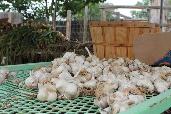 2015.07.17 Corrales Classic Farms-1.jpg