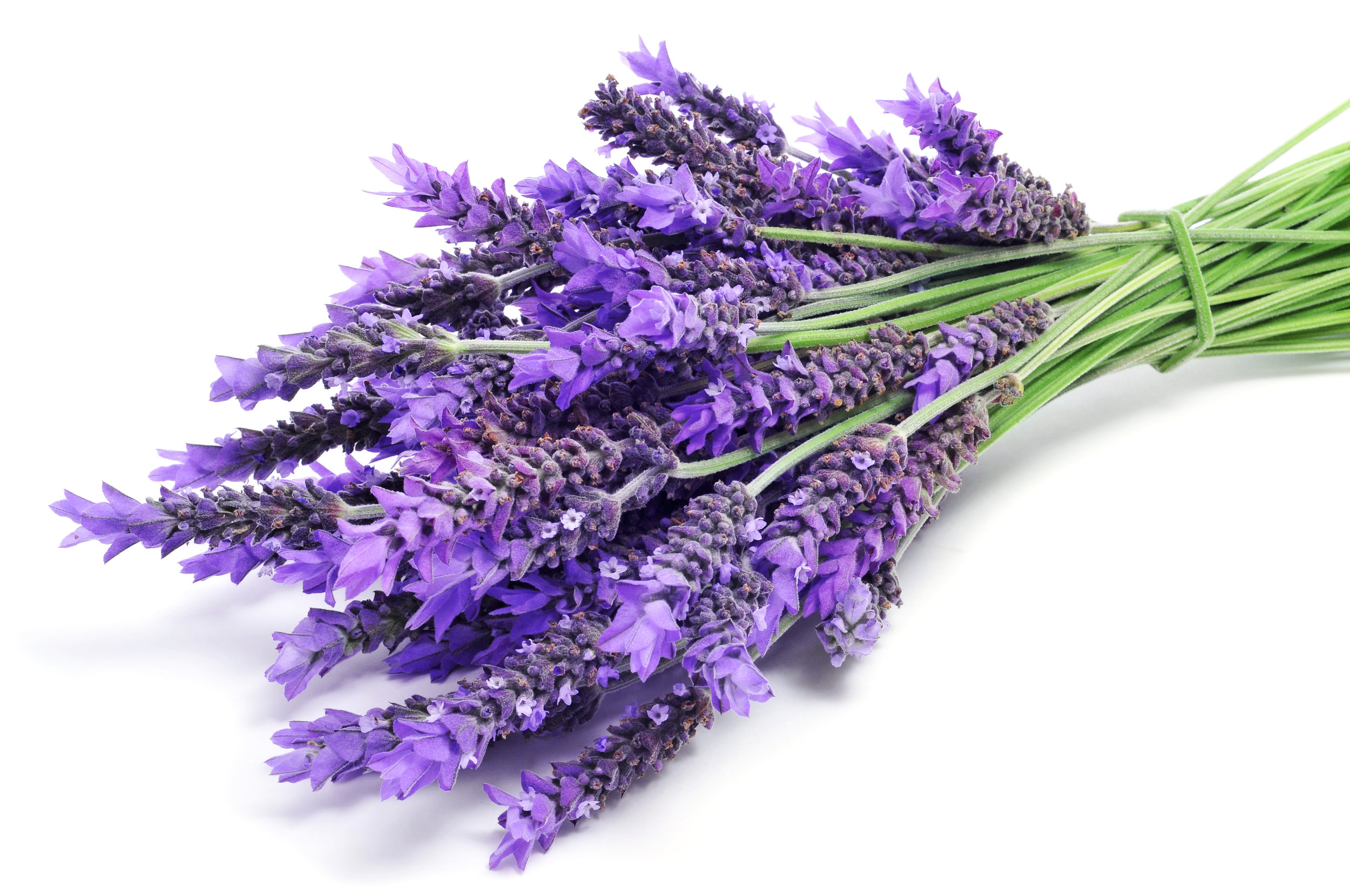 Lavender Stems in Bunch