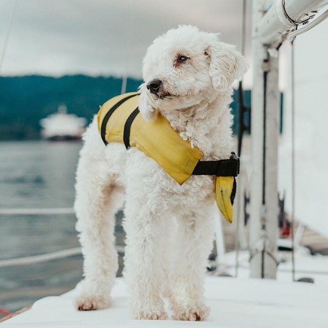 Skipper Gus ⚓️