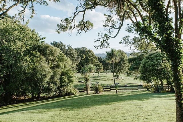 Just a reminder of the daily magic we are surrounded with in Cornwall park. ⁠ ⁠ Captured by @ivelinavelkovaphotography⁠ ⁠ ⁠ ⁠ #sorrentointhepark #aucklandweddings #aucklandweddingvenue #aucklandeventvenue #aucklandconference #aucklandconferencevenue #nzweddings #nzweddingvenue #newzealandweddingvenue #gardenwedding #nzgardenwedding  #auckland #newzealandwedding #wedspiration