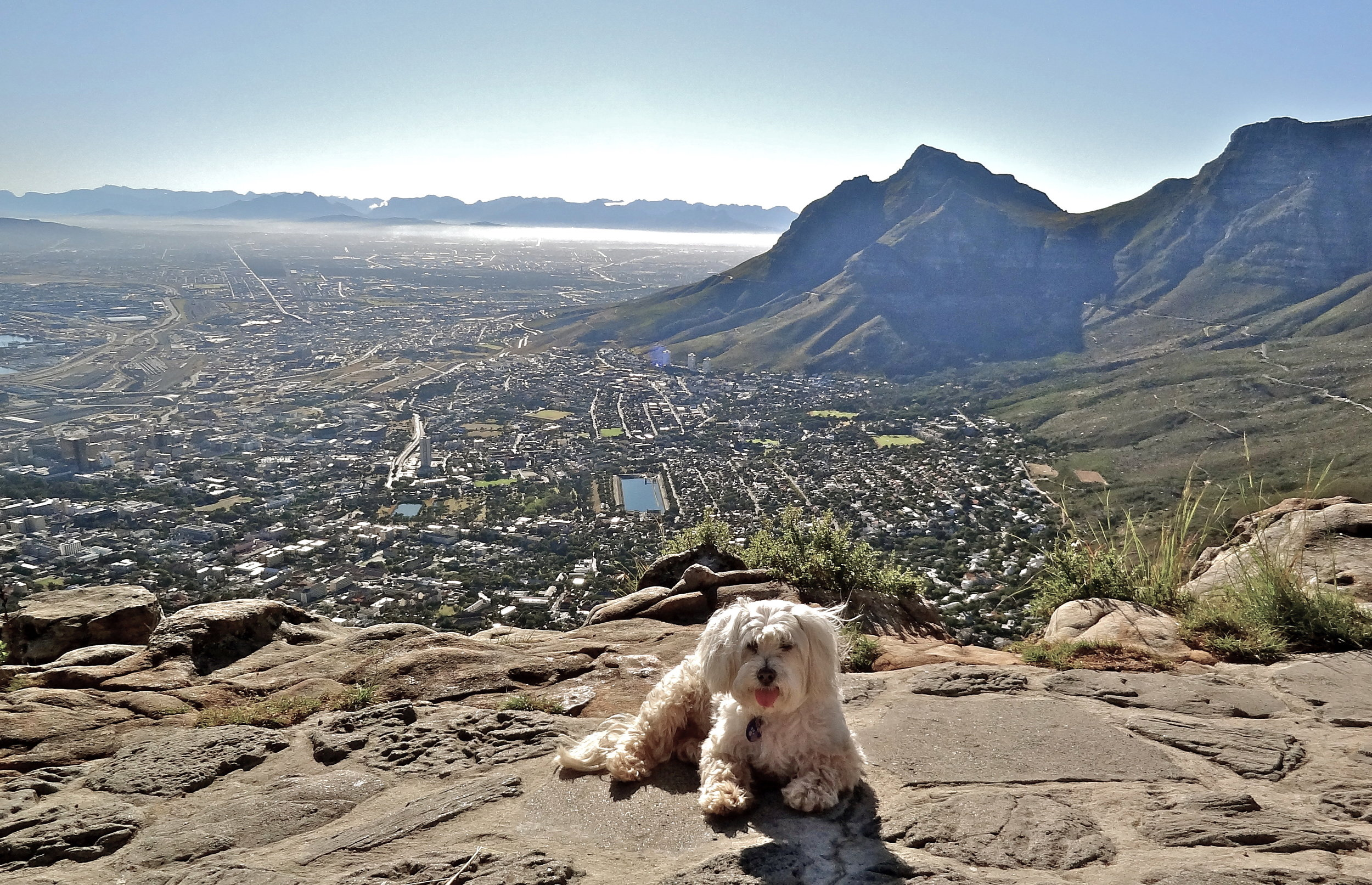Lion's Head, South Africa. Spring 2012.