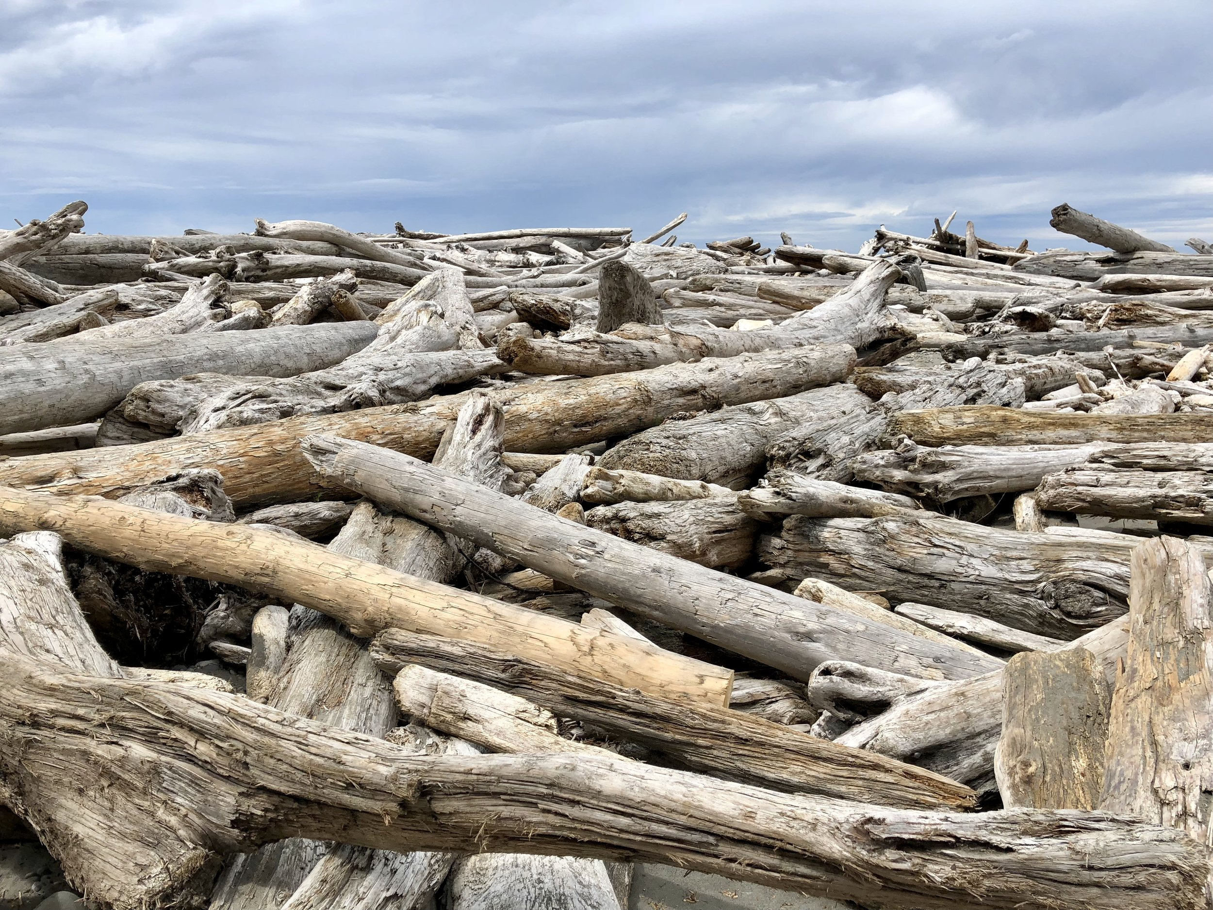 up close and personal with the driftwood!