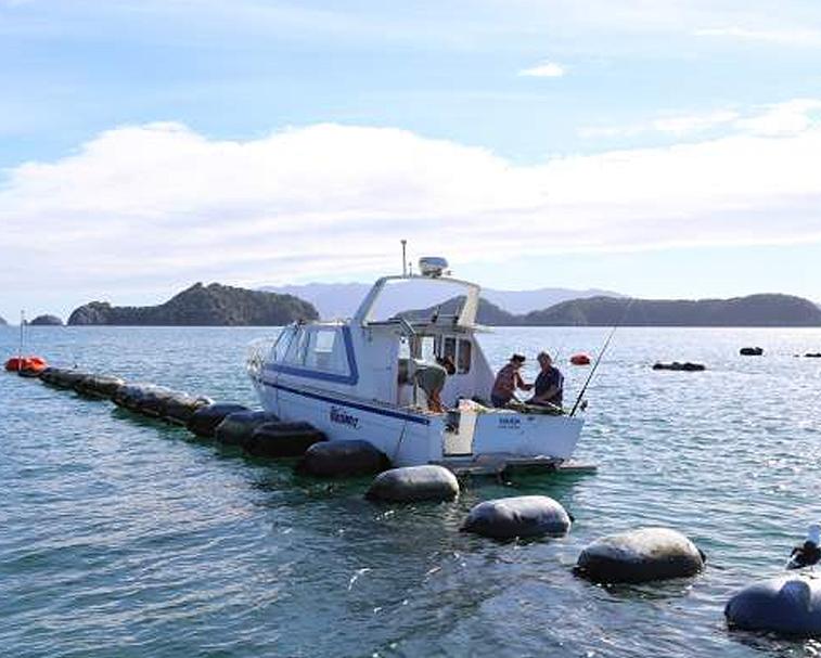 MUSSEL BARGE FISHING   Hannafords Wharf/Te Kouma Rd, Te Kouma   Your chance to hook a big one on a charter fishing boat.