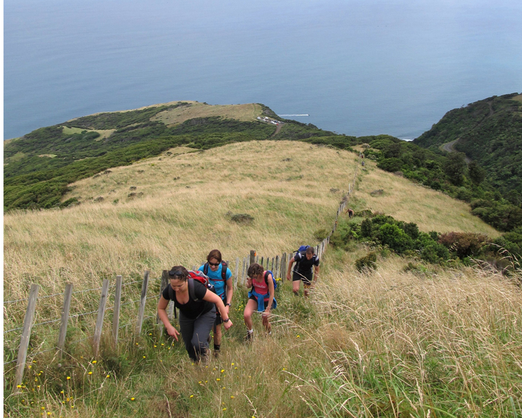 MT KARIOI WALKWAY   Te Toto Gorge   Challenging half day hike, rewards you with spectacular views.