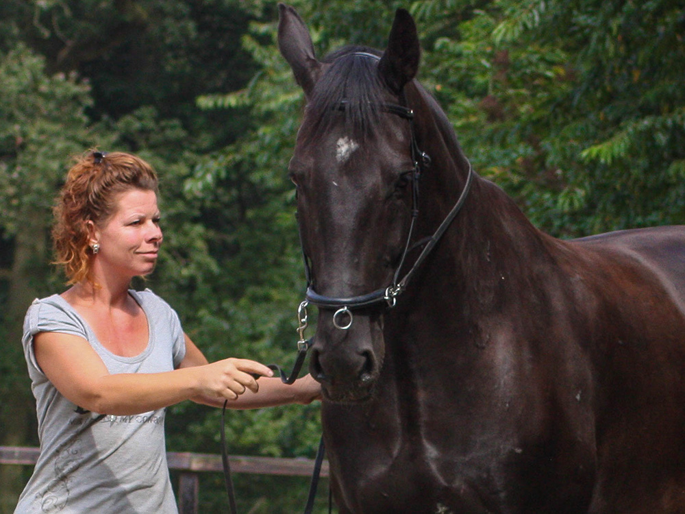 PAARD IN TRAINING - Heeft je paard een blessure, zoals hoefkatrolontsteking of langdurige vage kreupelheden? Of een rijtechnische probleem zoals niet nageeflijk willen zijn of een sterke voorkeur hebben naar links of naar rechts? Of een gedragsuitdaging zoals niet willen trailer laden?