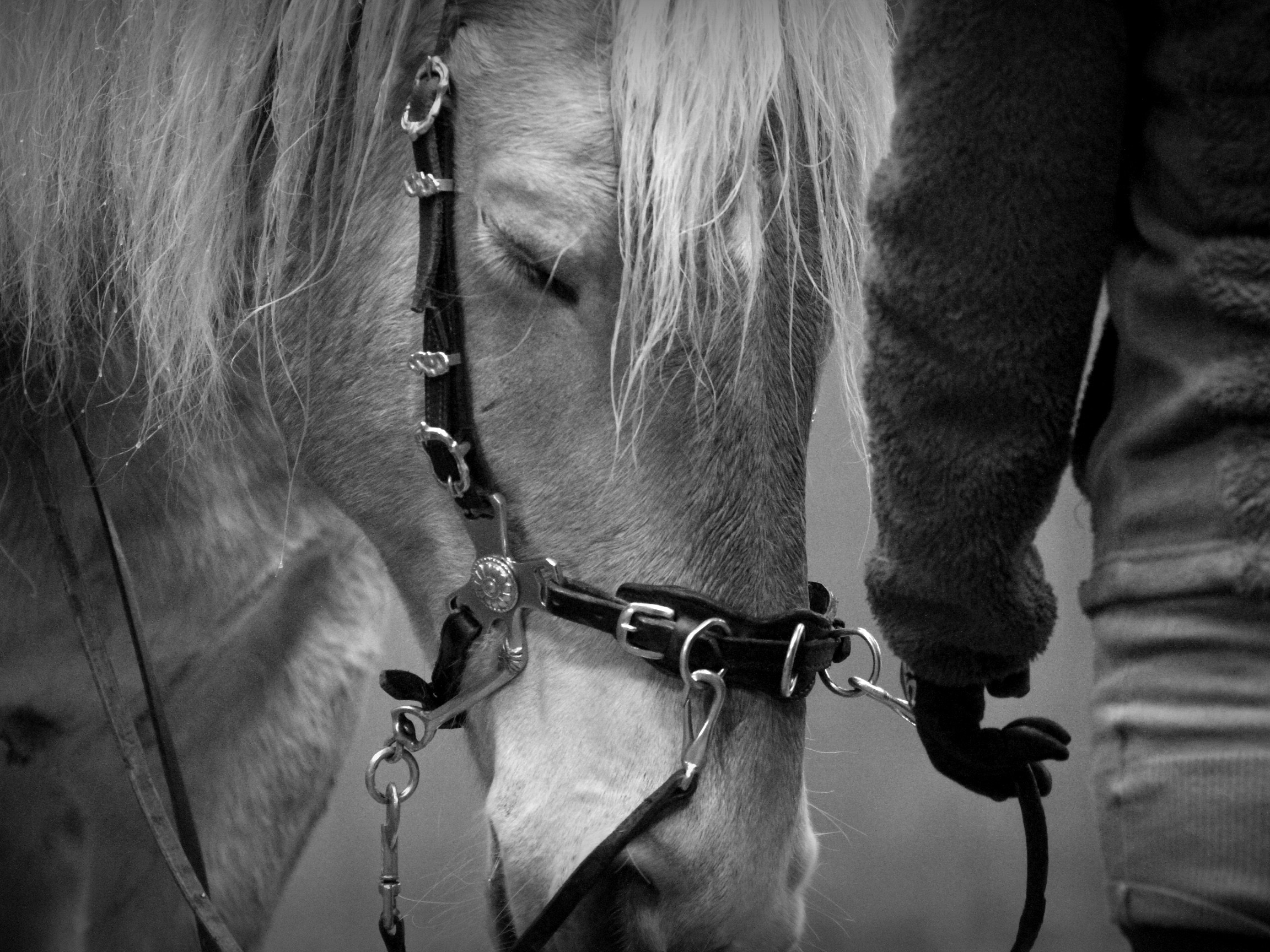 PRIVELESSEN - Als coach, instructrice en trainer begeleid ik jou en je paard tijdens intensieve privélessen. Deze privélessen worden gegeven op mijn thuislocatie Trainingscentrum De Maesberg in Arnhem.