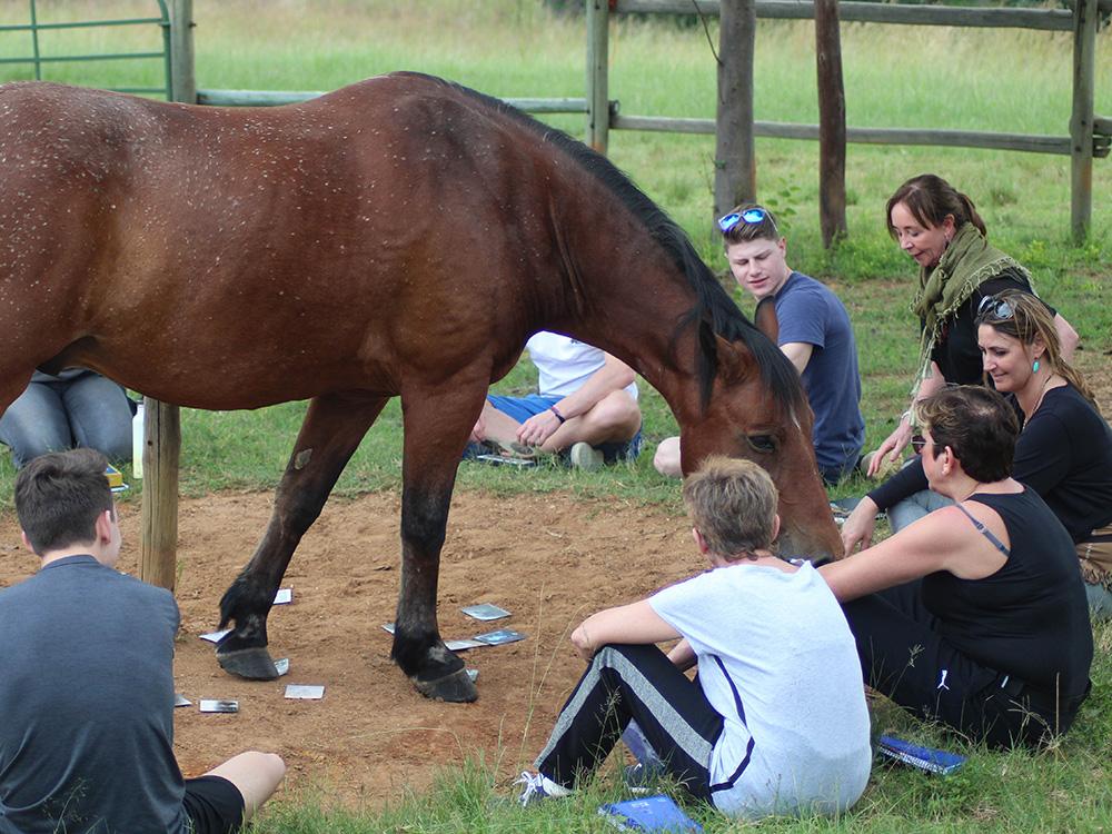 Voor teams, bedrijven & opleidingen - Even niet praten, maar doen, voelen en ervaren. Als groep in contact met het paard of zelfs paarden. Teams worden hechter, sterker en functioneler.