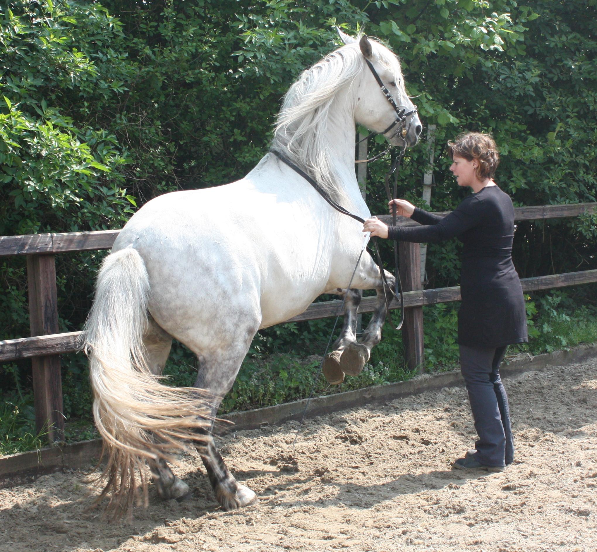 Trainen paarden zonder verwachting