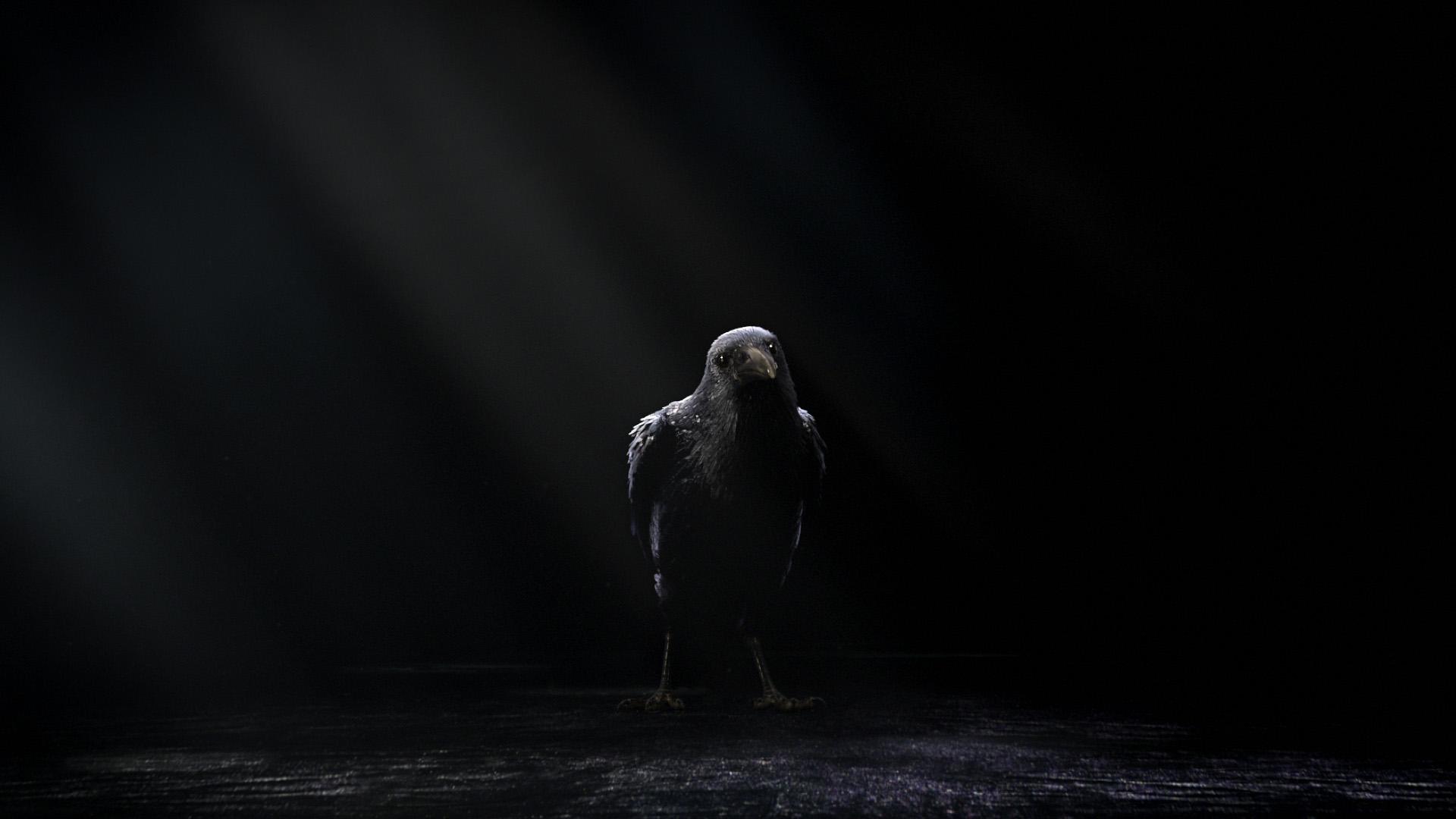 Fjällräven - Black