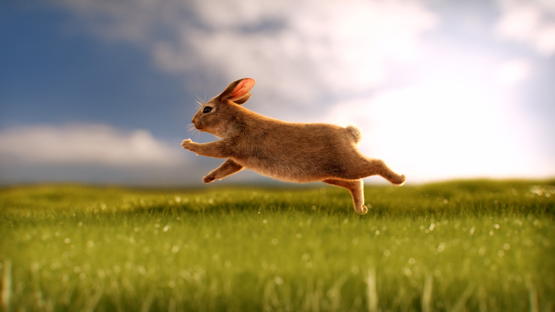 Penny - Bunny