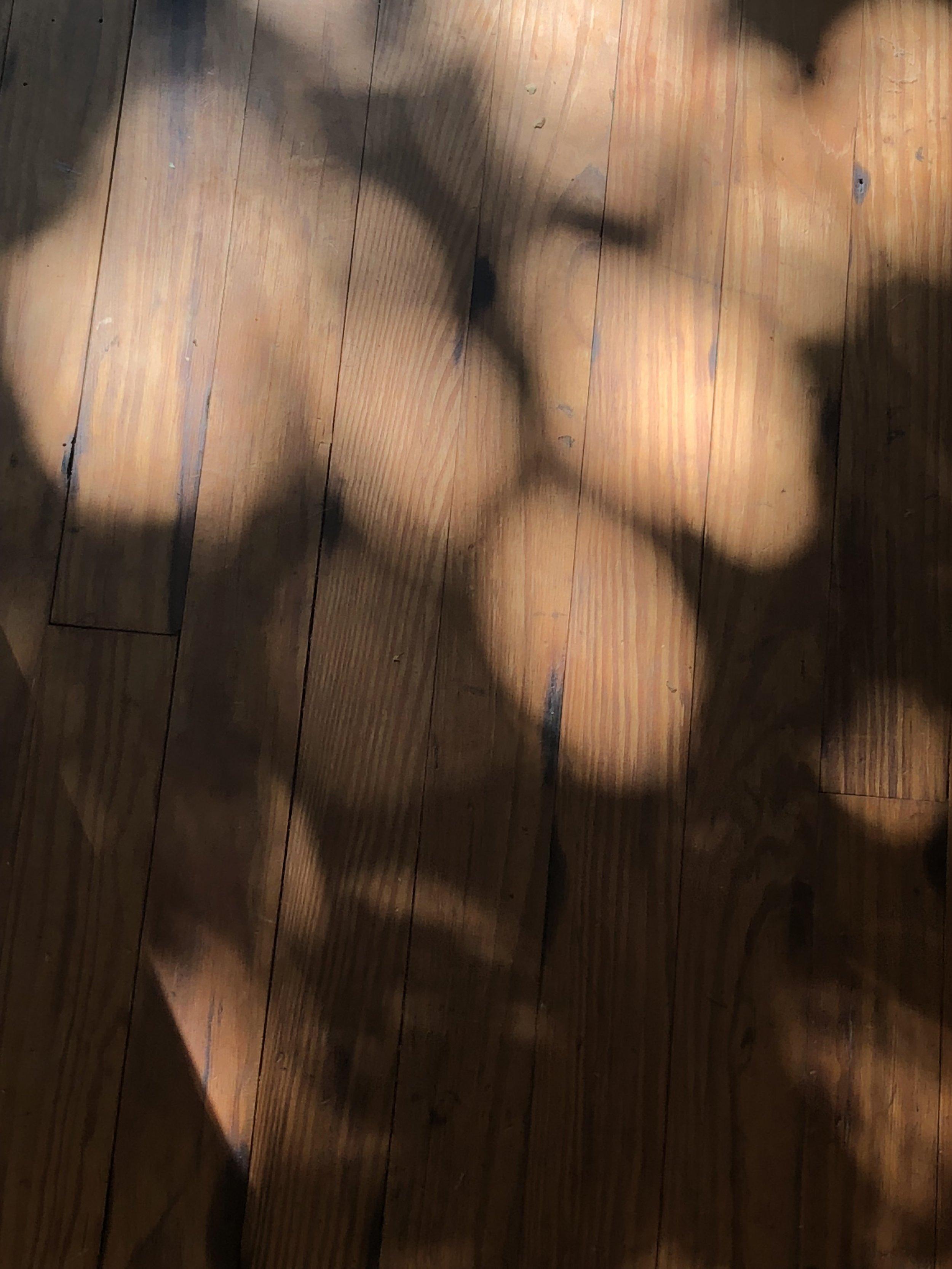 Equal Light .JPG