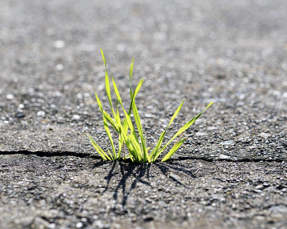 Grass-in-Driveways-56a5940d3df78cf77288e2bb.jpg