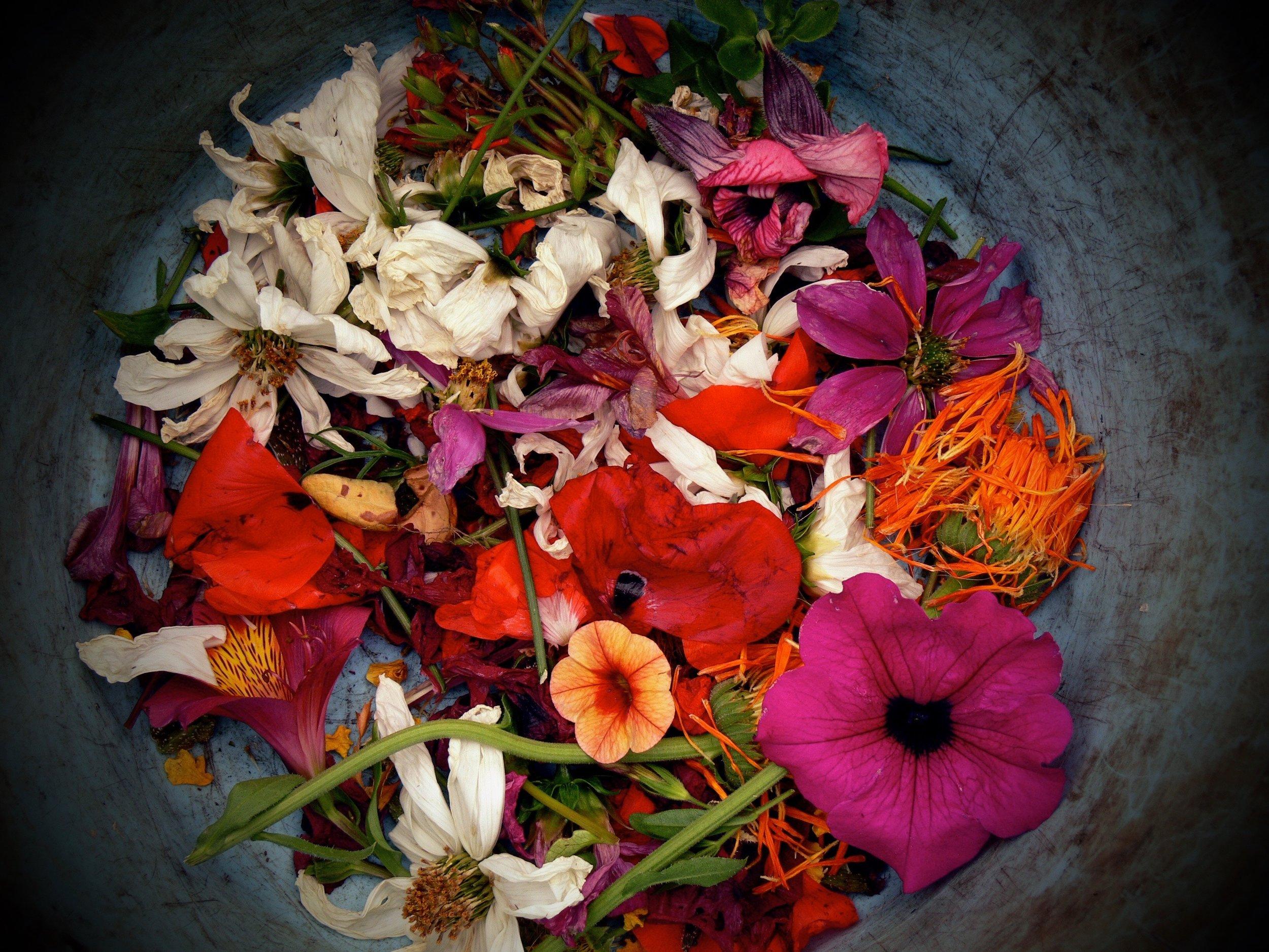 wild flowers edible raw salad