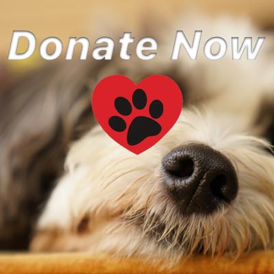 donate to animals