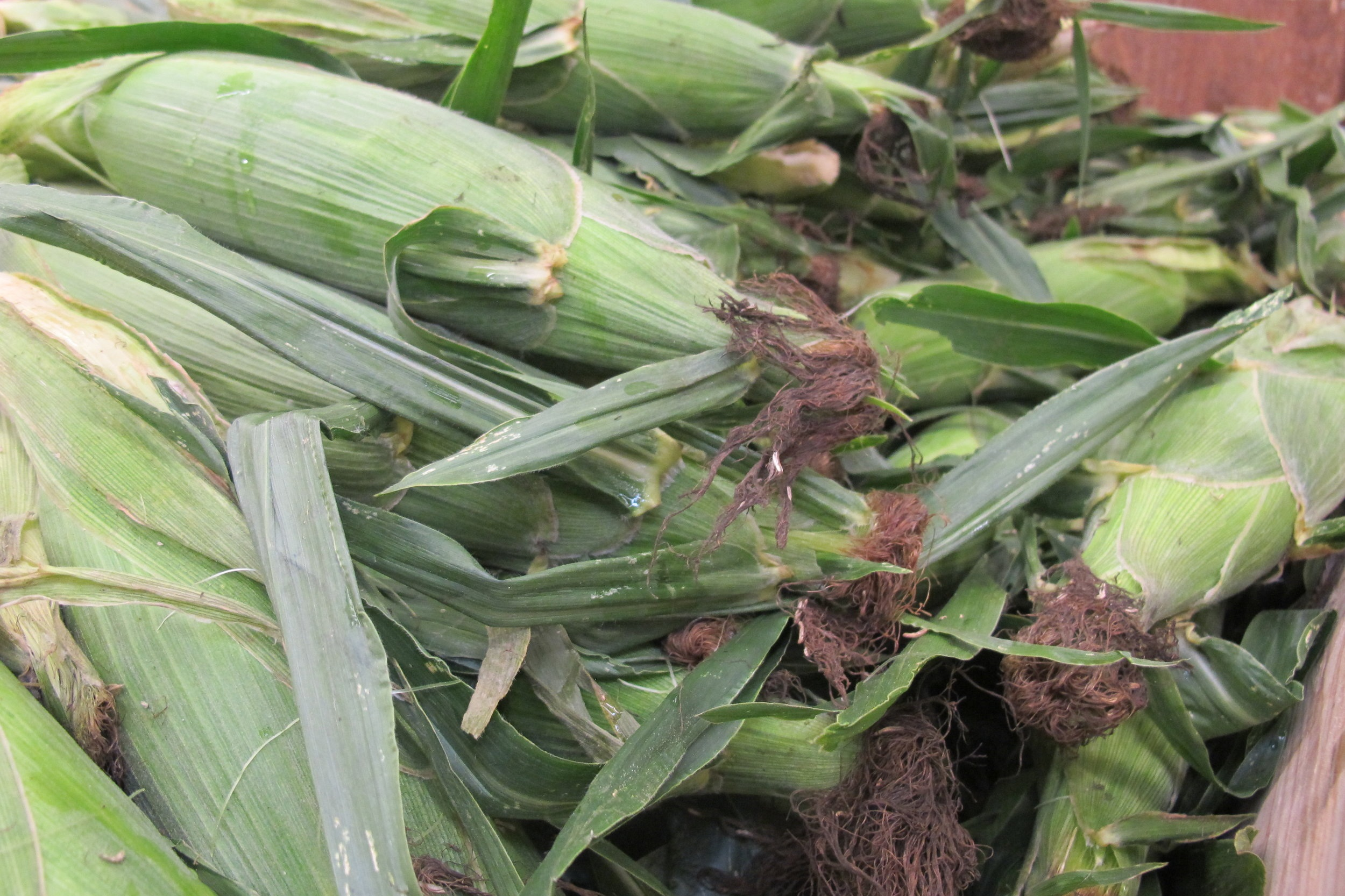 Gourmet Sweet Corn -