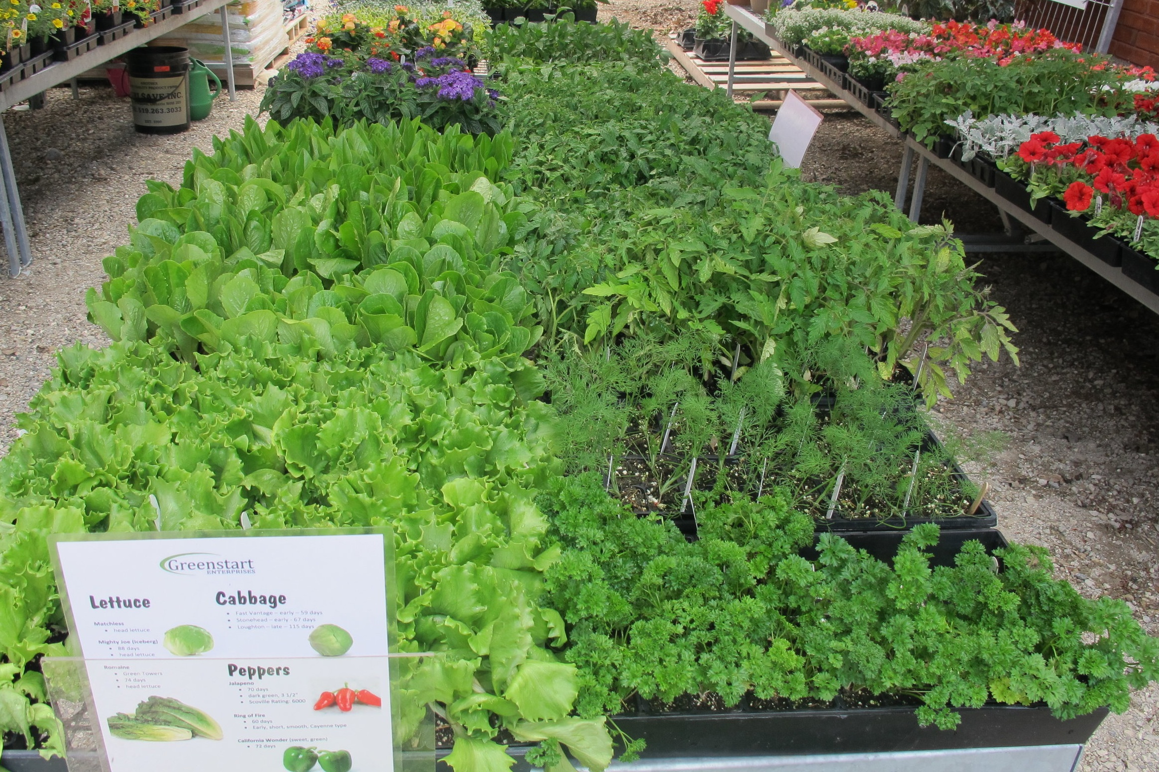 Vegetables - Lettuce, parsley, tomato (including Heritage varieties), peppers (sweet & hot), late & early varieties of cabbage.