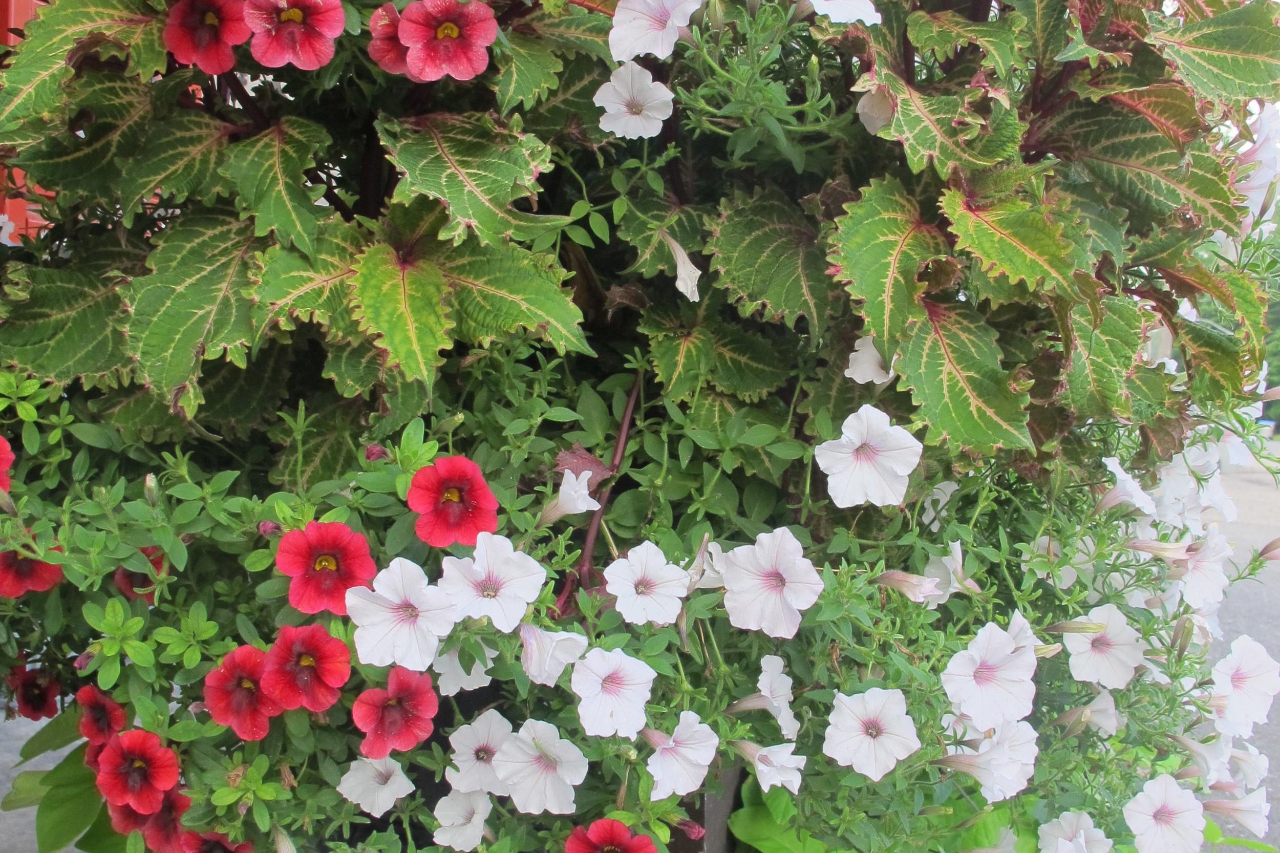 Garden Centre -