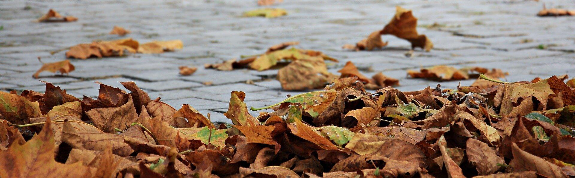 autumn-1685924_1920.jpg