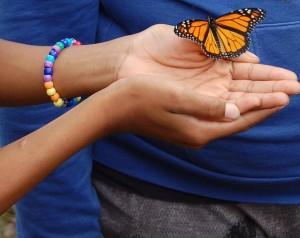 Butterfly-300x238.jpg