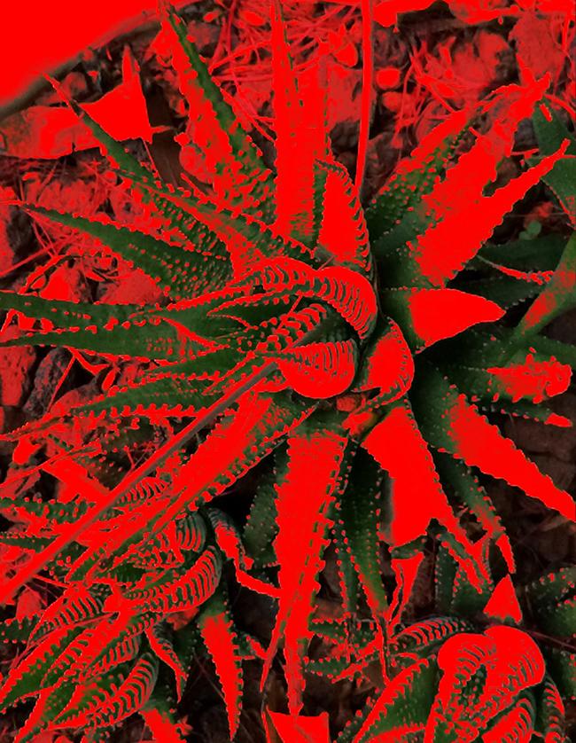 Aloe, 2016  Fotografía digital intervenida impresa en papel algodón  33 x 41 cm